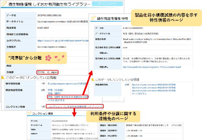 静岡県「しずおか有用微生物ライブラリー」登録データ画面