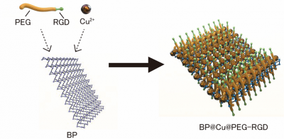 ナノ薬剤BP@Cu@PEG-RGDのイメージ図