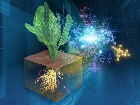 植物-微生物-土壌の複雑なネットワークのデジタル化の図