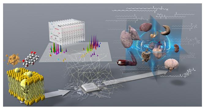 脂質分子種(左)を質量分析・情報科学で解析し(中央)生体組織中のリポクオリティを包括的に捉えたの図